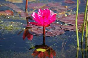 אינלה לייק – החיים על המים
