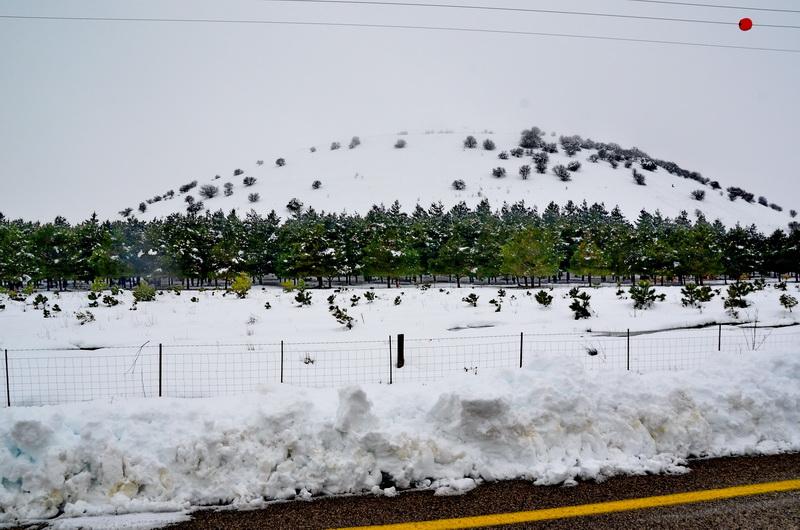 שלג גולן