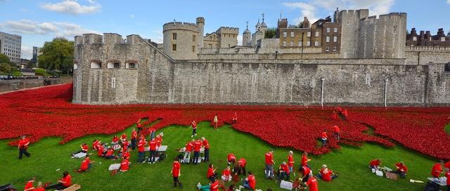 פרחי פרג בלונדון – ובגליל התחתון.