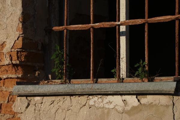 עשבים בחלונות בית הכנסת בדובנו
