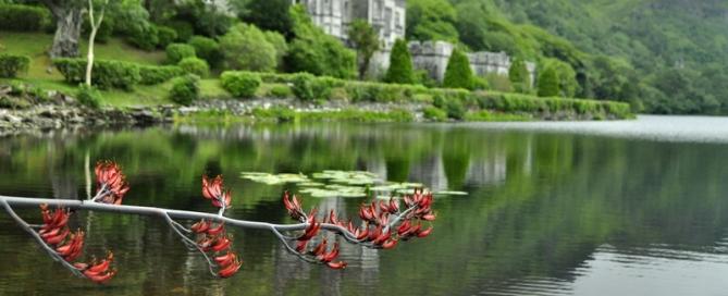 מנזר באירלנד, חברתי נורין, אהבה ומוות וסיפור געגועים.